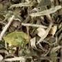 Thé blanc - Great Earl Grey