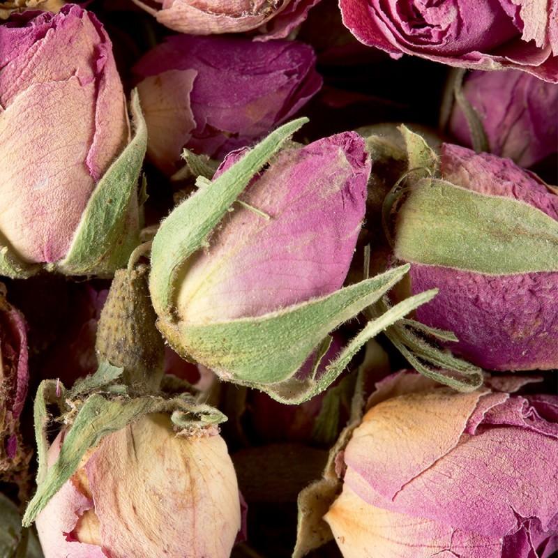 Tisane - Bouton de Rose